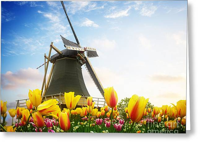 One Dutch Windmill Over  Tulips Greeting Card
