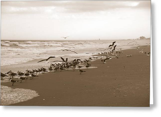 One Flap Of A Seagull Greeting Card by Susanne Van Hulst