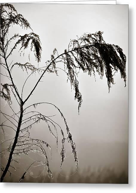 One Foggy Morning Greeting Card by Carolyn Marshall