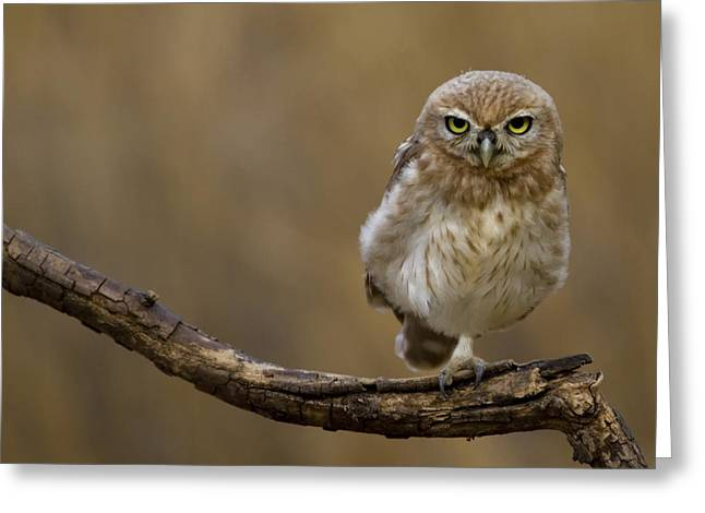One Foot Greeting Card by Amnon Eichelberg