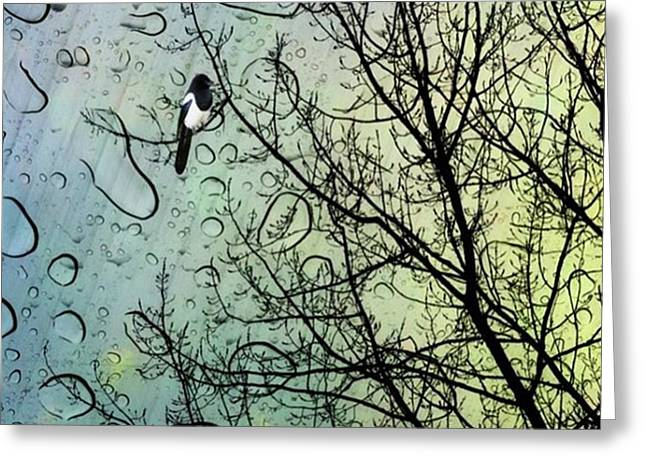 One For Sorrow #nurseryrhyme Greeting Card by John Edwards