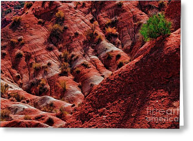 One Green Bush In Pahreah Ghost Town Greeting Card by Blake Richards