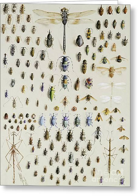 One Hundred And Fifty Insects, Dominated At The Top By A Large Dragonfly Greeting Card