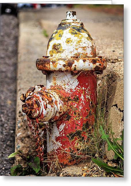 One Hydrant - Too Many Dogs Greeting Card