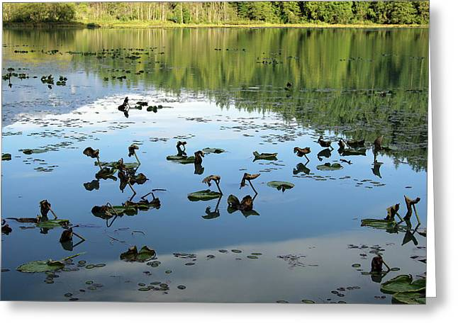One Mile Lake Reflections 1 Greeting Card by Walter Fahmy