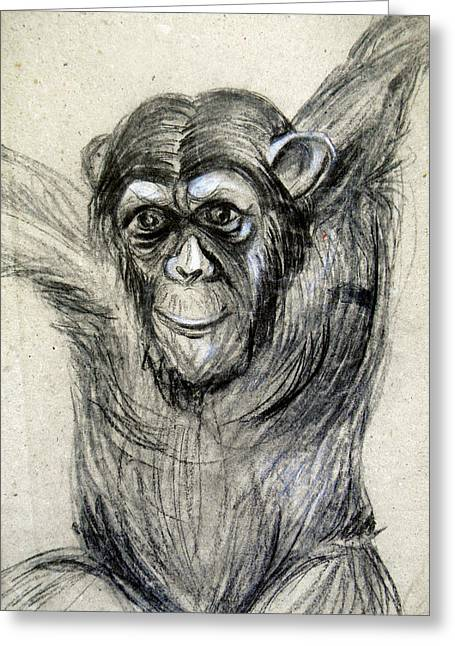 One Of A Kind Original Chimpanzee Monkey Drawing Study Made In Charcoal Greeting Card by Marian Voicu