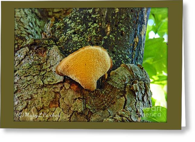 One Of Natures Treasures Greeting Card