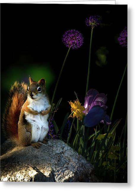 One Red Squirrel  Greeting Card by Bob Orsillo