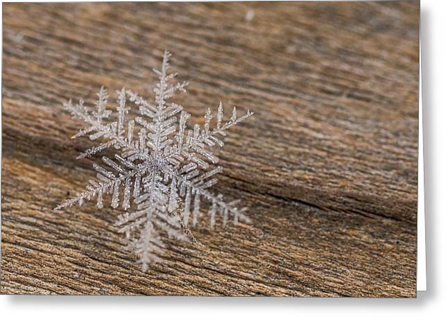 Greeting Card featuring the photograph One Snowflake by Ana V Ramirez