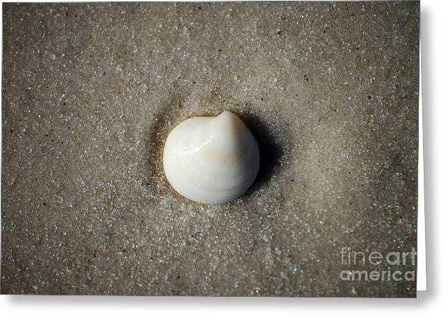 One Striped Pastel Sea Shell Macro On Fine Wet Sand Greeting Card by Shawn O'Brien