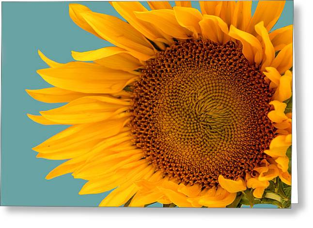 One Sunflower Loving Vincent Greeting Card