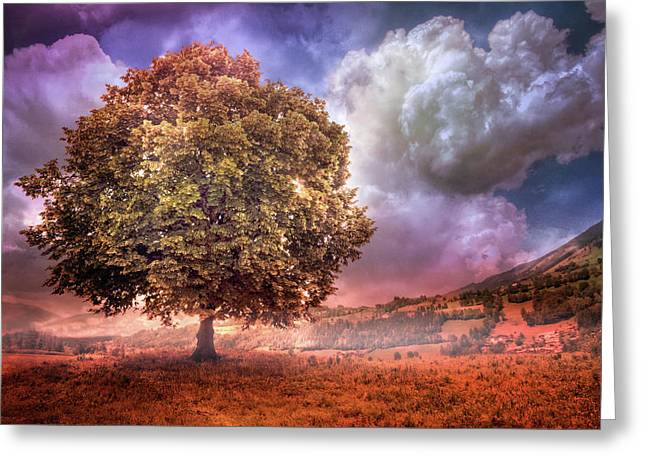 Greeting Card featuring the photograph One Tree In The Meadow by Debra and Dave Vanderlaan