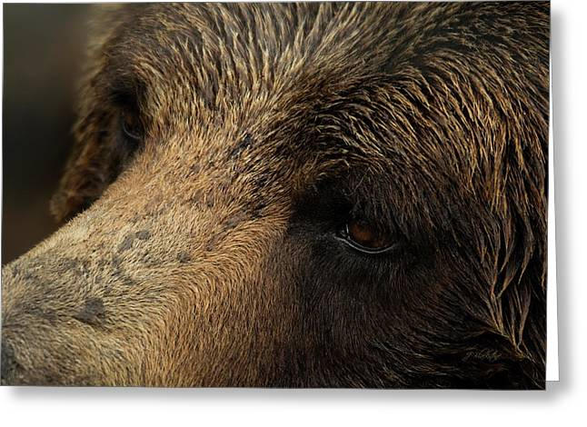Greeting Card featuring the photograph One Who Sees - Grizzly Bear Art by Jordan Blackstone