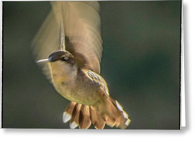 One_wing Greeting Card