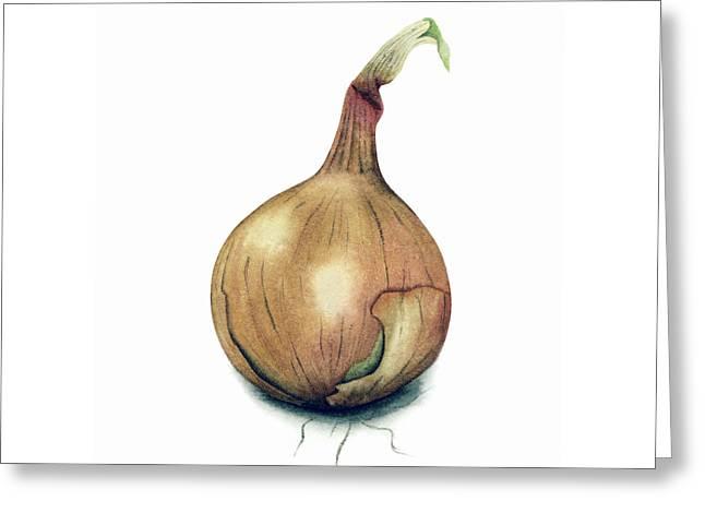 Onion Watercolor Greeting Card by Taylan Apukovska