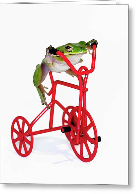 Tree Frog Greeting Cards - Only 3 More Miles Greeting Card by Janet Fikar