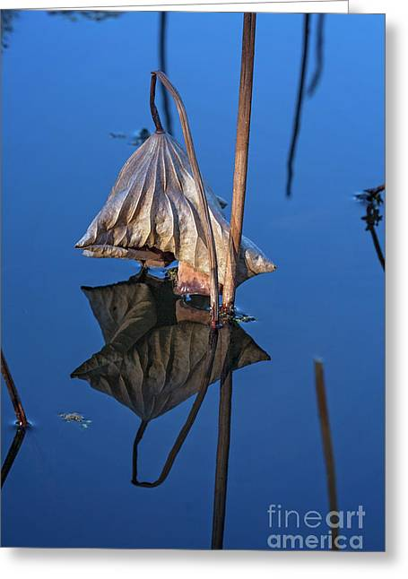 Greeting Card featuring the photograph Only In Still Water by Linda Lees