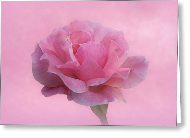 Only Pink Rose Greeting Card by Sandy Keeton
