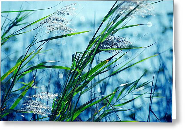 Oats Digital Greeting Cards - Only the wind knows Greeting Card by Susanne Van Hulst
