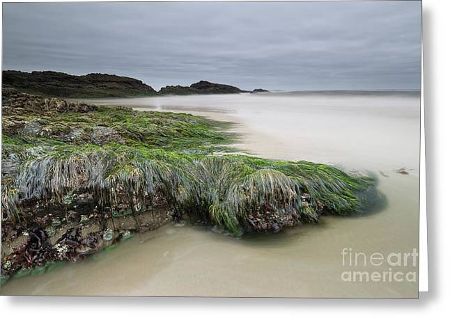 Only When It's Super Low Tide Greeting Card