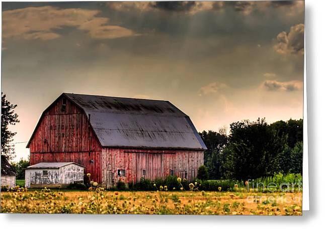 Red Buildings Photographs Greeting Cards - Ontario Barn in the Sun Greeting Card by Tim Wilson