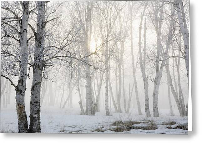 Ontario, Canada Birch Trees In The Fog Greeting Card by Susan Dykstra