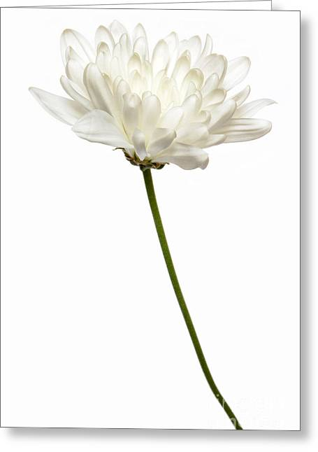 One White One Greeting Card by Dan Holm