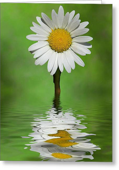 Greeting Card featuring the photograph Oops Za Daisy by Rick Friedle