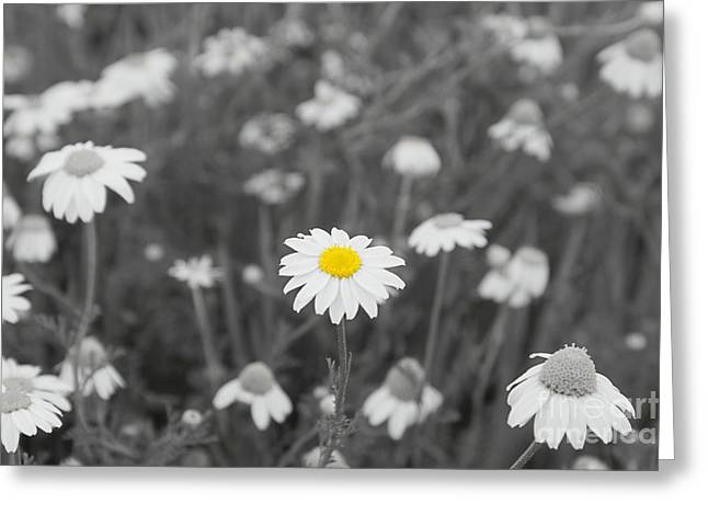 Greeting Card featuring the photograph Oopsy Daisy by Benanne Stiens