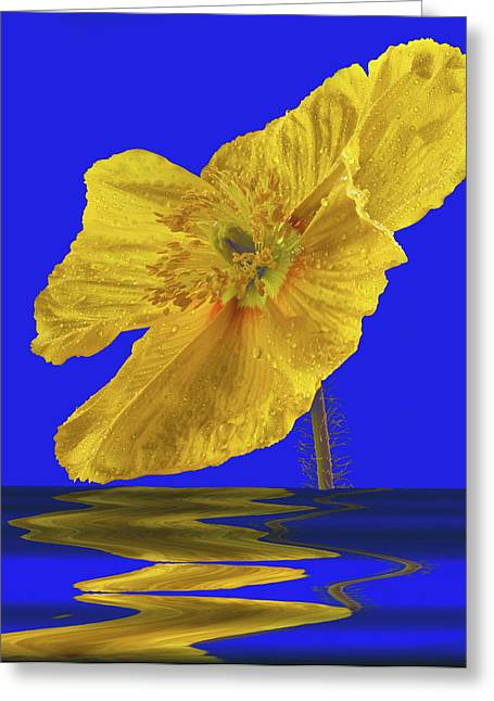 Open Iclandic Poppy Reflection Greeting Card by Jean Noren