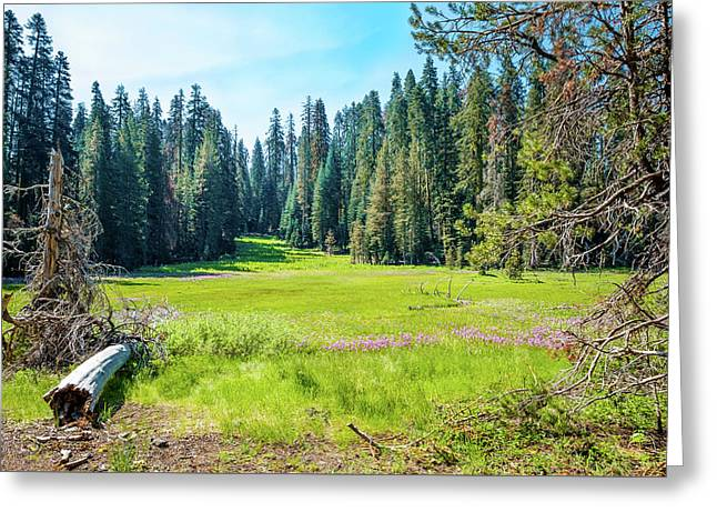 Open Meadow- Greeting Card