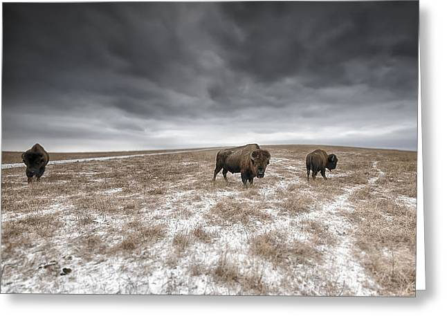 Open Range Greeting Card by Garett Gabriel