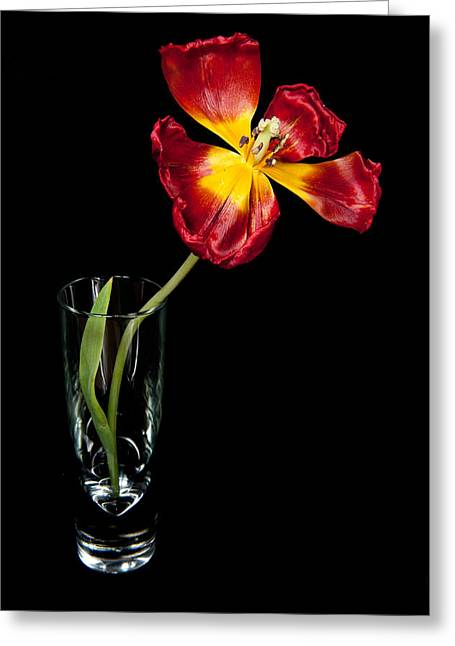 Open Red Tulip In Vase Greeting Card by Helen Northcott