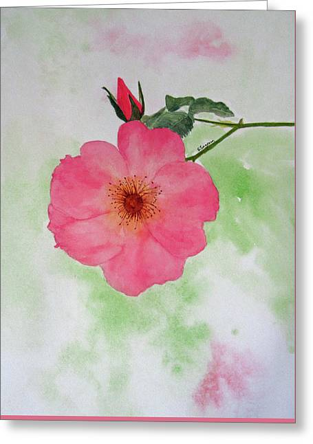 Open Rose Greeting Card