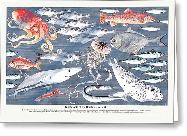 Open Sea Annotated Greeting Card by Jacqueline Colley