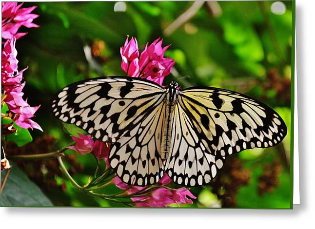 Open Wings Greeting Card