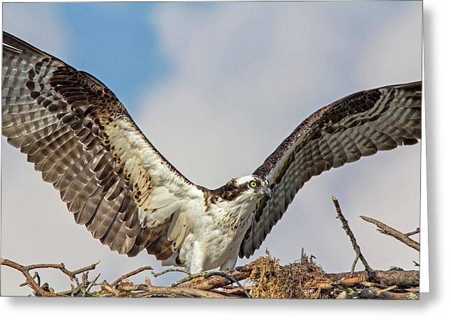 Greeting Card featuring the photograph Open Wings by Robert Pilkington