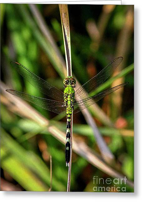 Greeting Card featuring the photograph Openminded Green Dragonfly Art by Reid Callaway