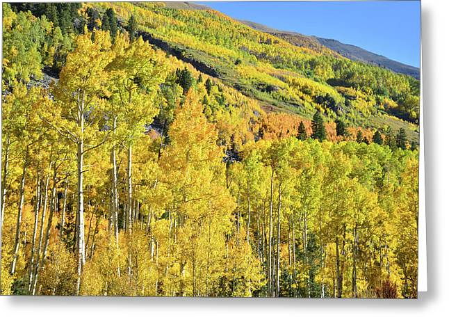 Greeting Card featuring the photograph Ophir Road Hillside by Ray Mathis