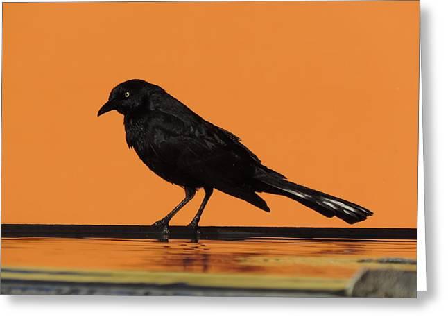 Orange And Black Bird Greeting Card