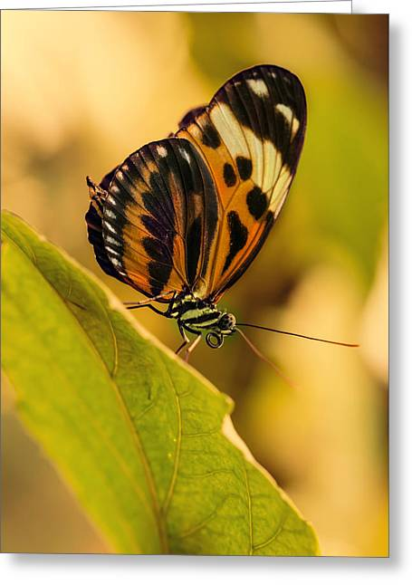 Orange And Black Butterfly On The Green Leaf Greeting Card