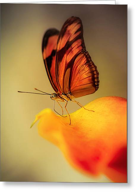 Orange And Black Butterfly Sitting On The Yellow Petal Greeting Card