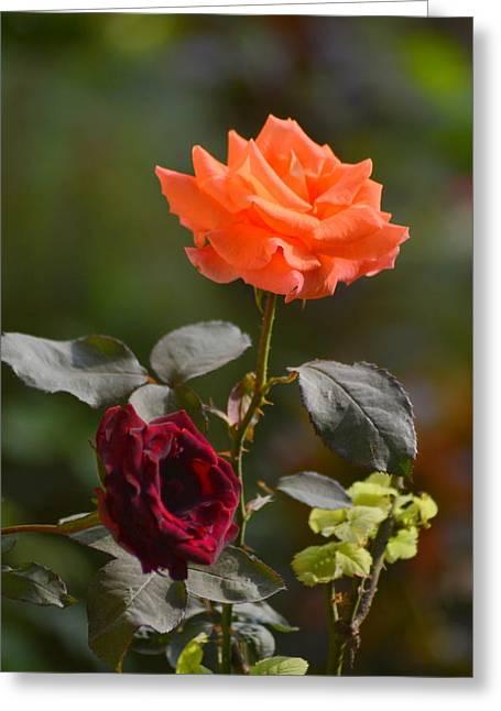 Orange And Black Rose Greeting Card