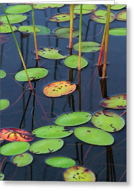 Greeting Card featuring the photograph Orange And Green Water Lily Pads  by Juergen Roth