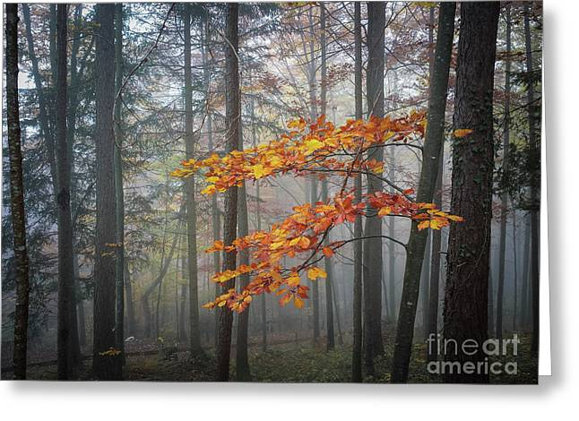 Greeting Card featuring the photograph Orange And Grey by Elena Elisseeva