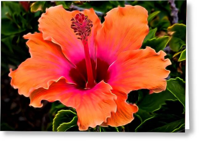 Orange And Pink Hibiscus 2 Greeting Card