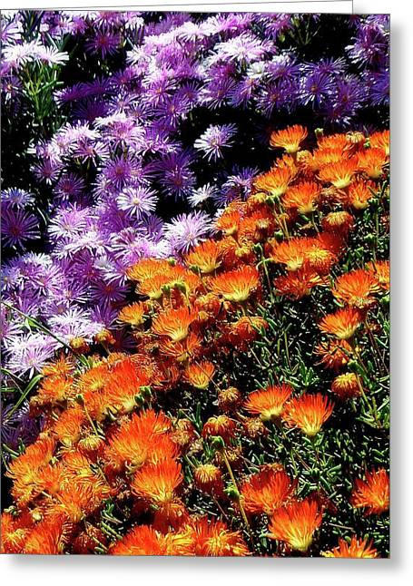 Orange And Purple Flowers Greeting Card by Kieoh AB Cazden