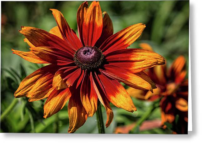 Greeting Card featuring the photograph Orange And Red by Robert Pilkington