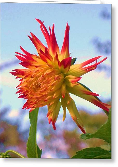 Orange And Yellow Dahlia Greeting Card by Eric  Schiabor
