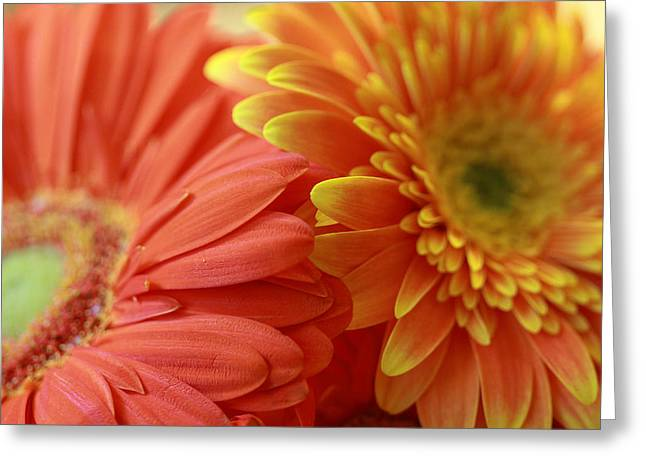 Orange And Yellow Daisies Greeting Card